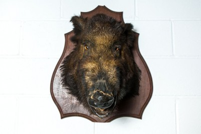 boar head mount